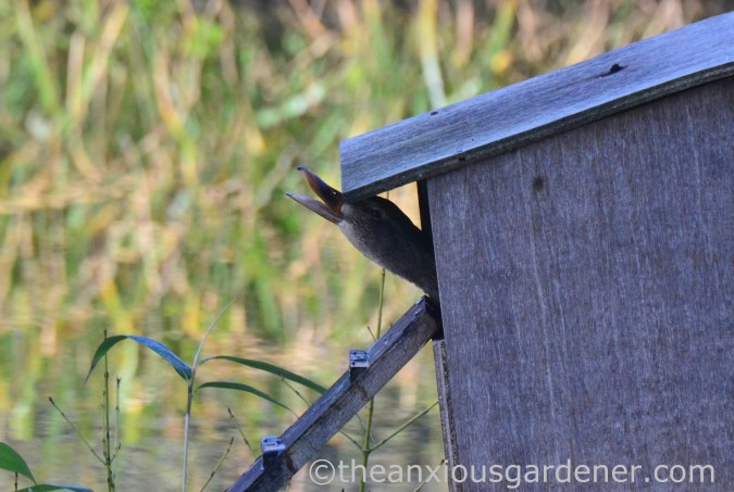 Duck nest box