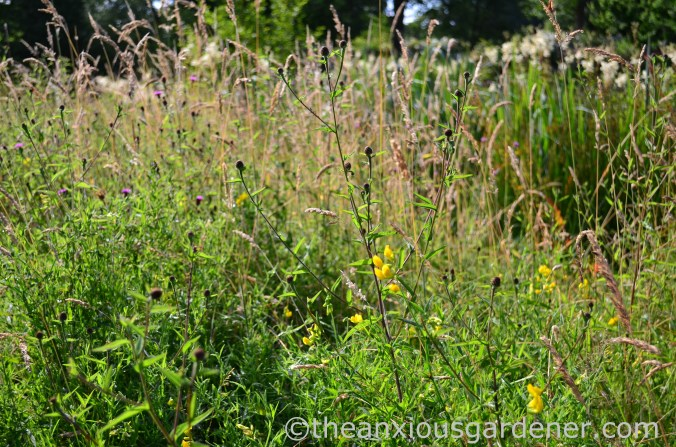 Flower meadow (2)