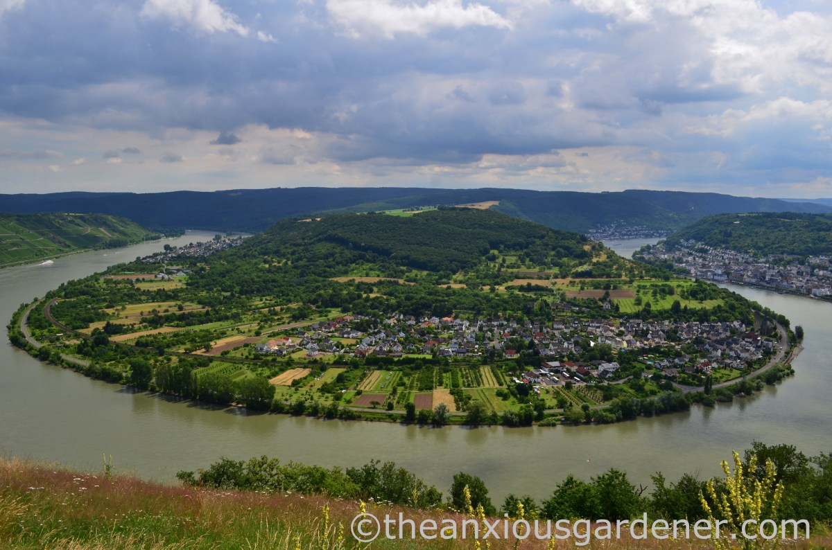 The Rhine Cycle Route: Mainz to Cologne