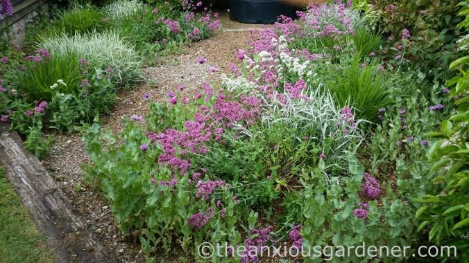 Gravel Garden (2)