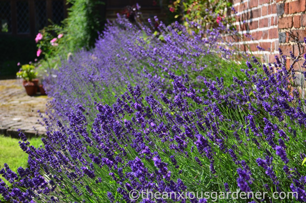 A Garden Tour: The Priory In July