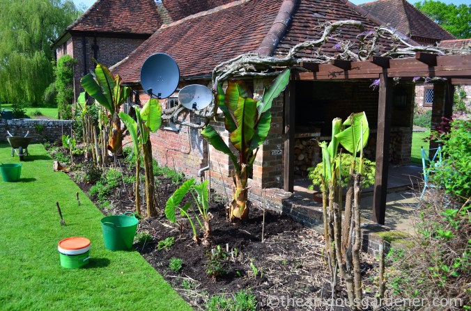 planting-out-tropical-border
