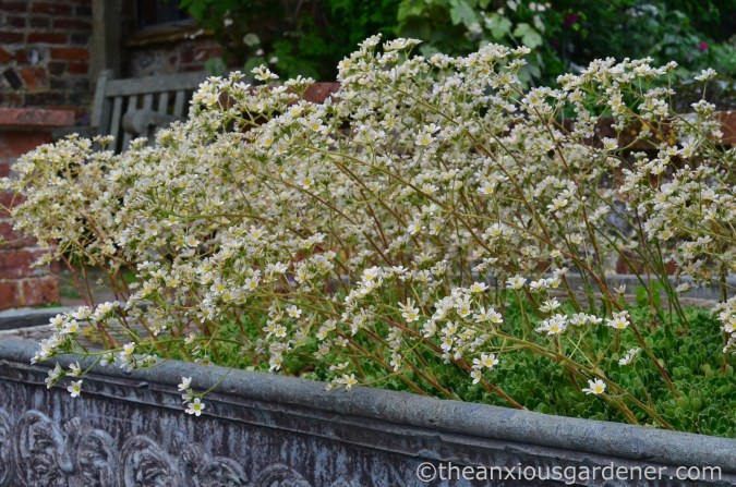saxifrage-planter-clergy-house-1