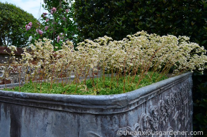 saxifrage-planter-clergy-house-2