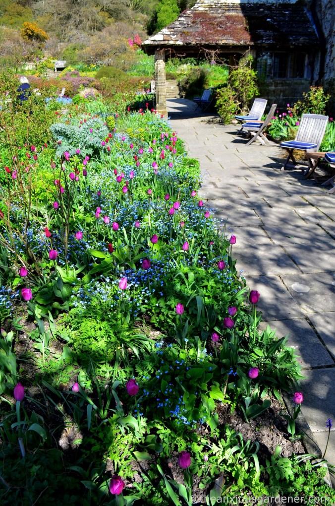 gravetye-manor-tulips