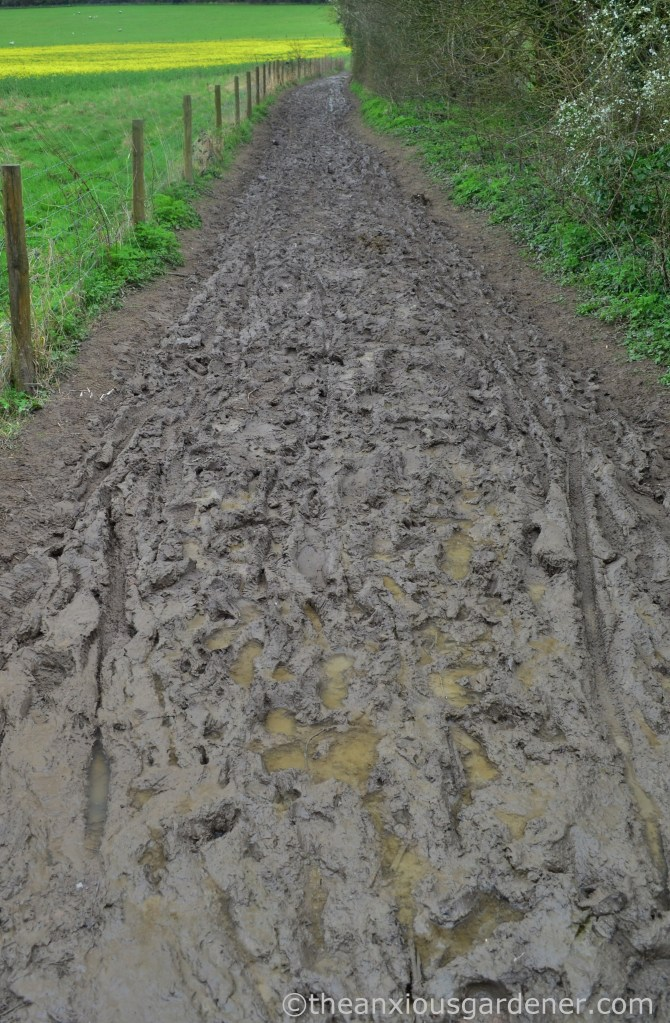 Mud, South Downs Way