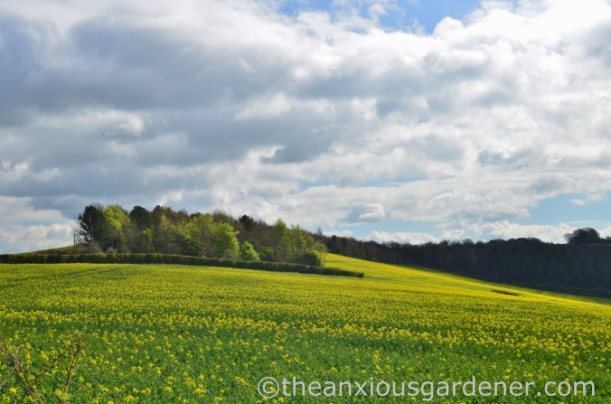 Rape Field, South Downs Way (2)