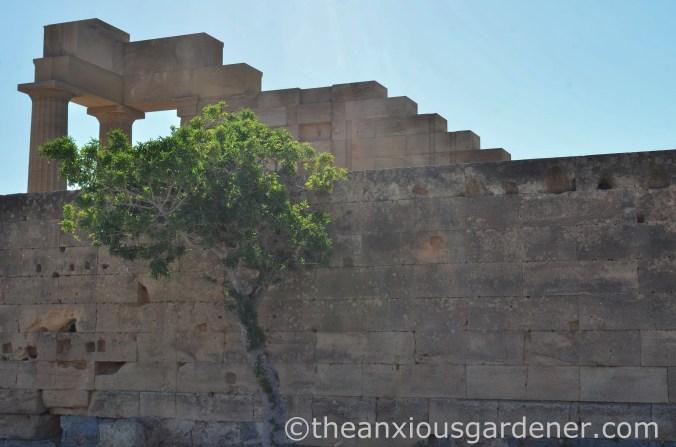 Acropolis Lindos (2)
