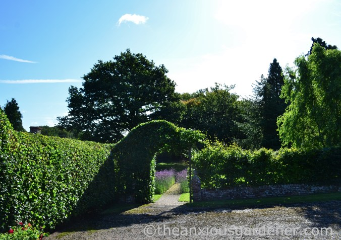 Beech Hedge Arches (1)
