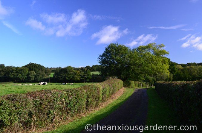 Clipped Mixed Hedging (1)