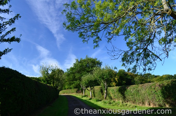 Clipped Mixed Hedging (2)