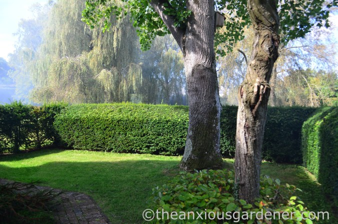 Yew Hedging (1)