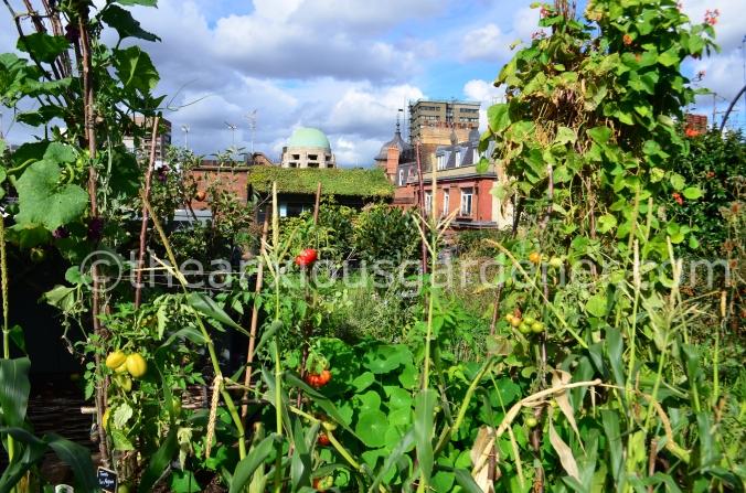 Ham Yard Roof Garden (6)