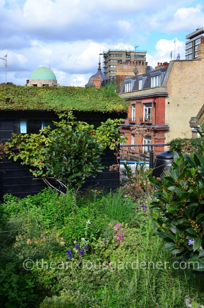 Ham Yard Roof Garden (7)