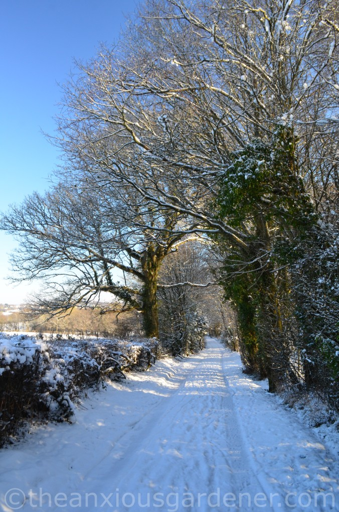 Snow over the Priory (1)