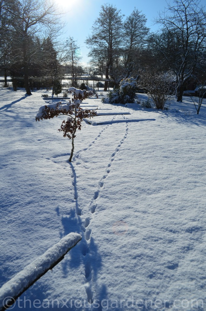 Snow over the Priory (12)