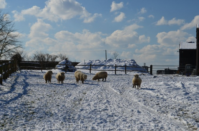 Snow over the Priory (19)