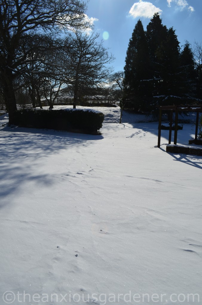 Snow over the Priory (21)