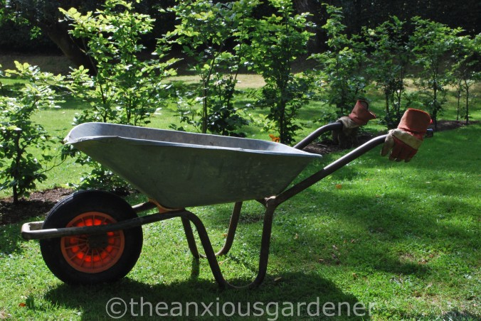 The Old Wheelbarrow (2)