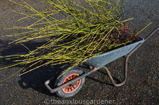 The Old Wheelbarrow (5)
