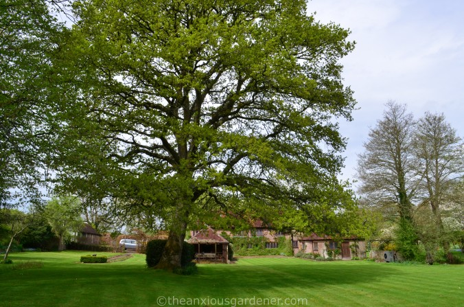 The Priory Oak (1)