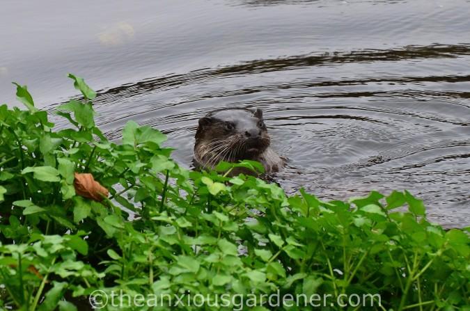 Otter Stroud (2)