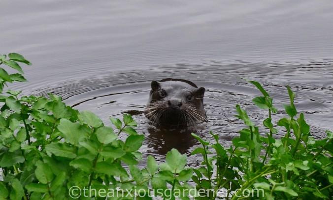 Otter Stroud (3)