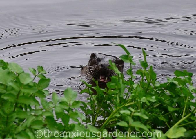 Otter Stroud (4)