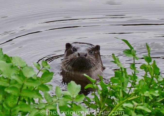 Otter Stroud (5)