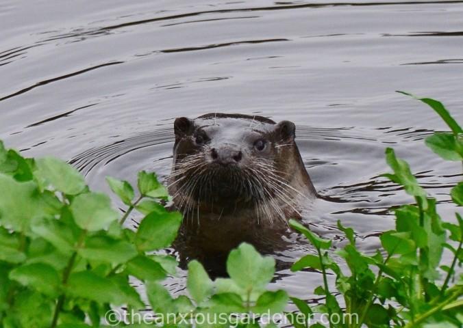 Otter Stroud (6)
