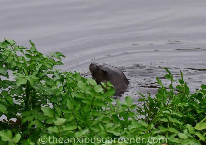 Otter Stroud (7)
