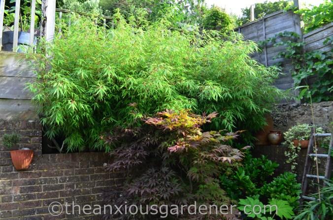 New House New Garden (25)