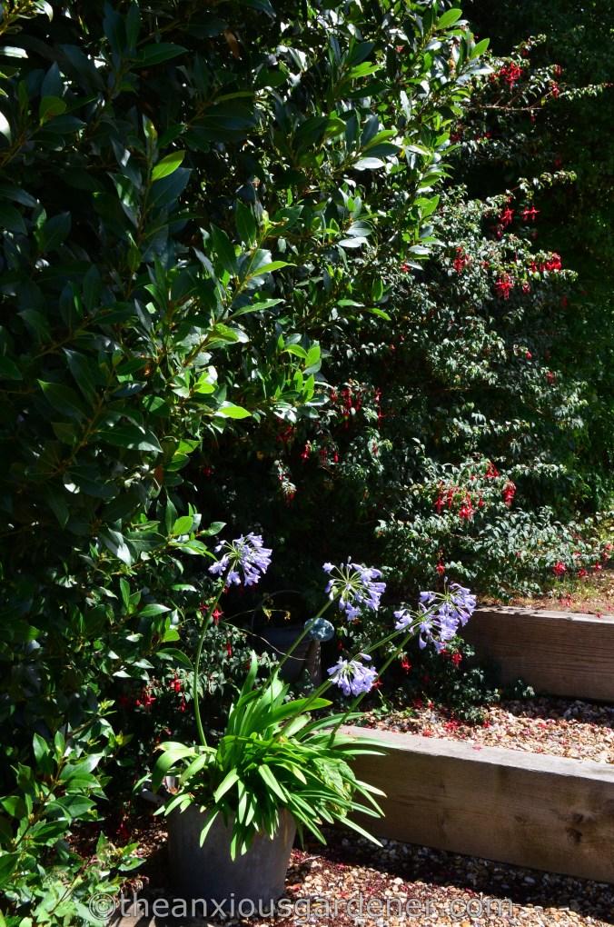 New House New Garden (46)